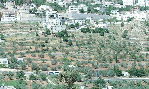 palestina_520