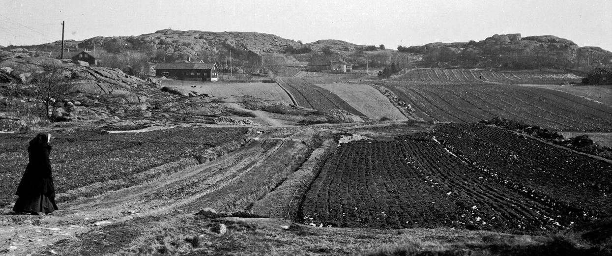 gumman-mellan-fiskeback-och-langedrag-1907